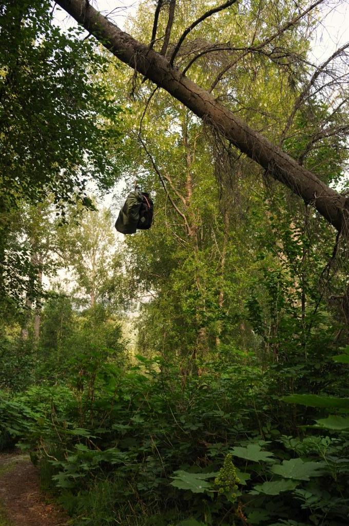 Hanging our food for the night. If the bears can get that, they deserve it...