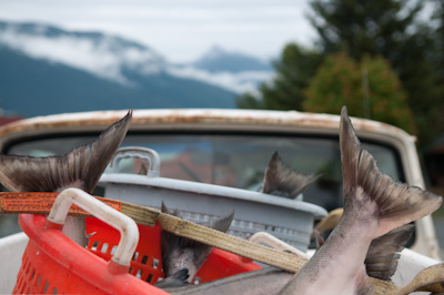 Old pickup + fish = Alaska