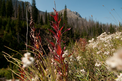 New life spurts out of the ground in areas cleared by forest fires.