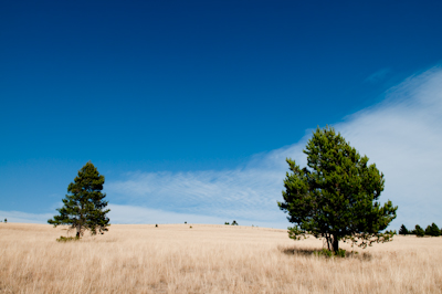 I liked this scenery, sparse and mellow. Most of my vision was taken up by Montana's trademark big sky.