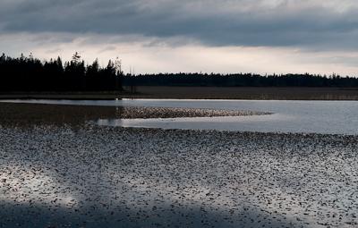 Loon Lake.