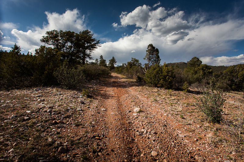 The forest of of El Rito is drier, more desert like, with junipers giving way to ponderosas.
